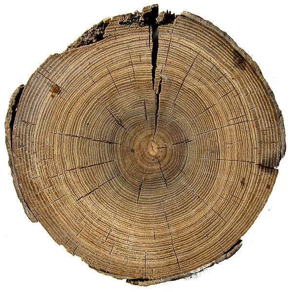 circlewood